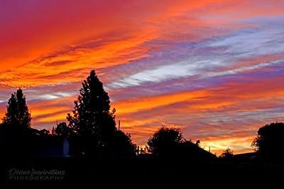 sunrise/008276 **