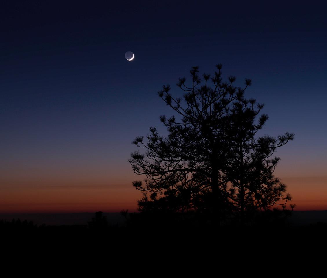 Good Night Auburn
