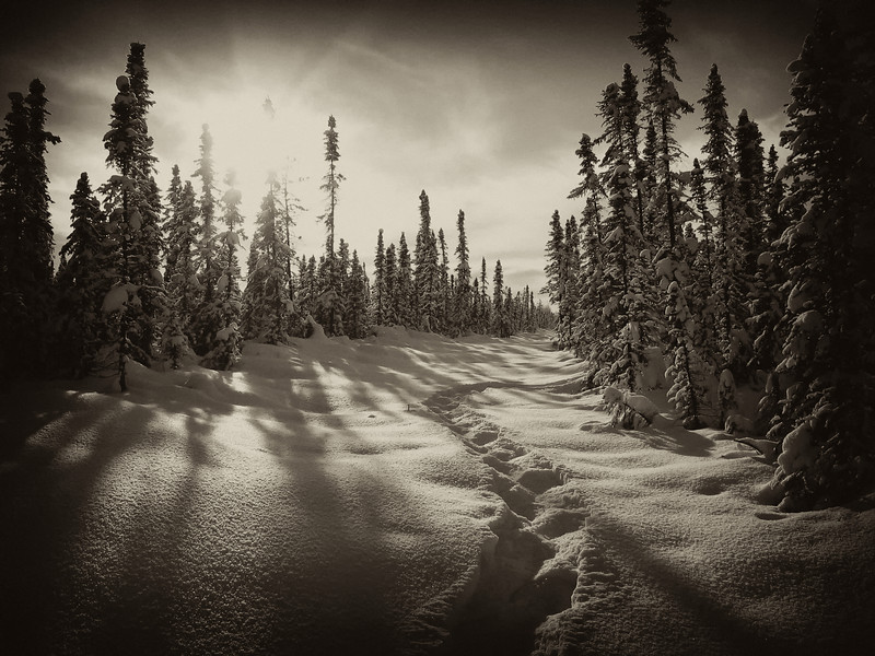 Winter cutline, northern British Columbia, Canada