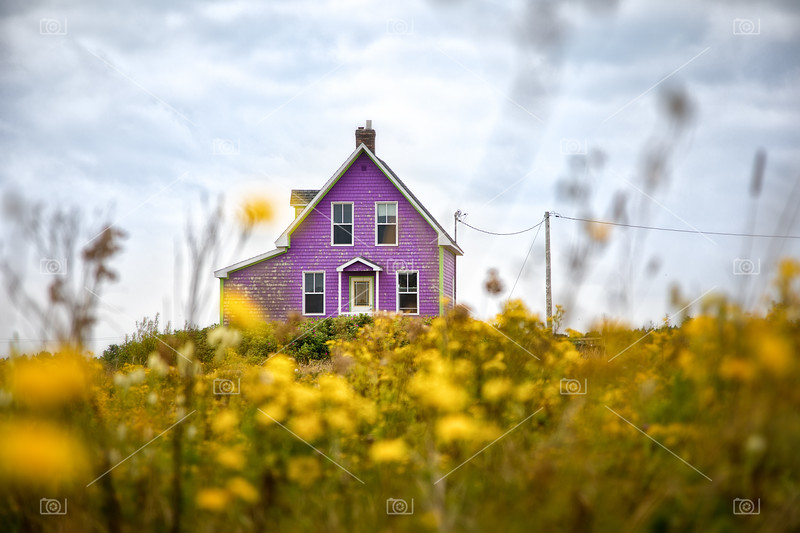 Purple house and yellow flowers