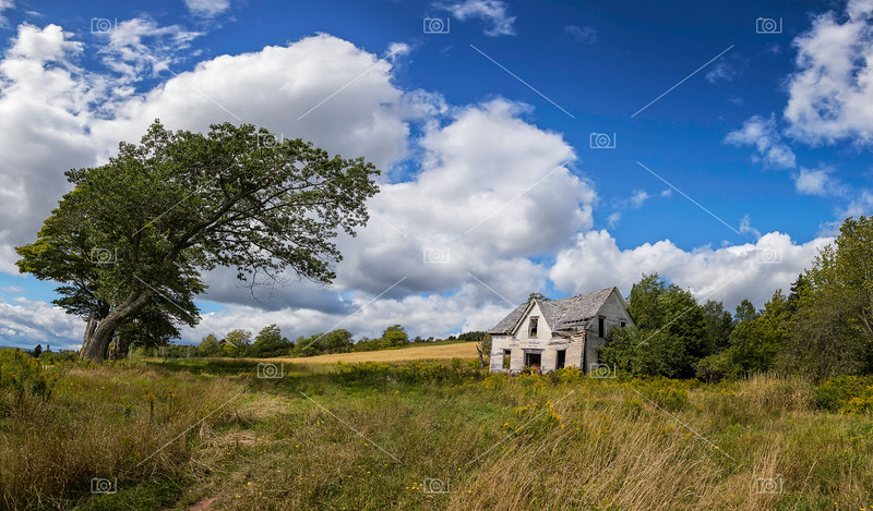 Derelict house and old tree
