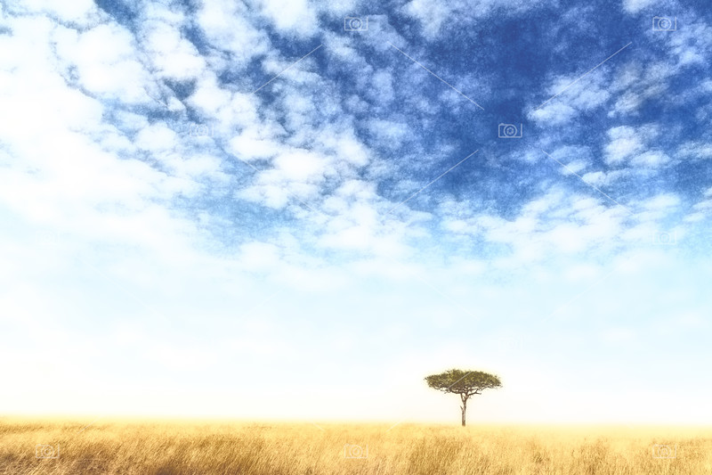 Masai Mara lone tree watercolour