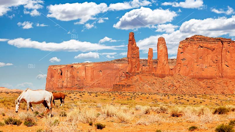 Wild horses in Monument Valley