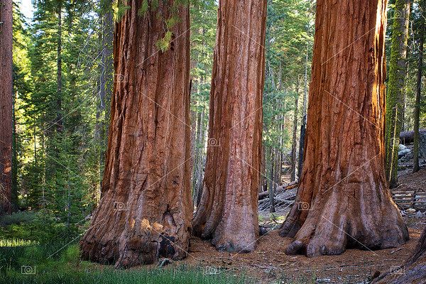 Three Graces, Yosemite