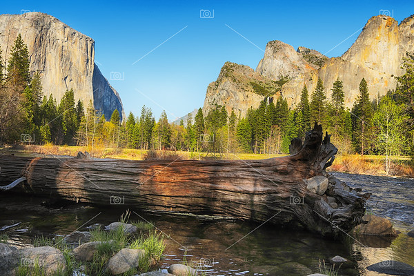 Fallen tree in Yosemite