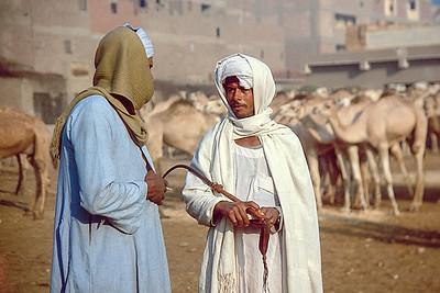 Imbaba camel market