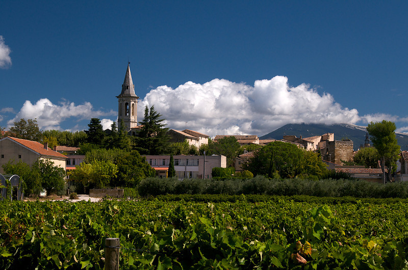Vineyard before Aubignan