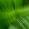NBb93 Palm Frond Abstract, Selva Verde, Costa Rica