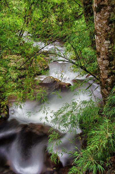 WAb281 Cloud Forest Stream, Bosque de Paz, Costa Rica
