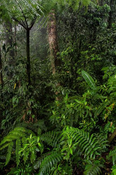 WAb403 Rain Forest, Sarchi, Costa Rica