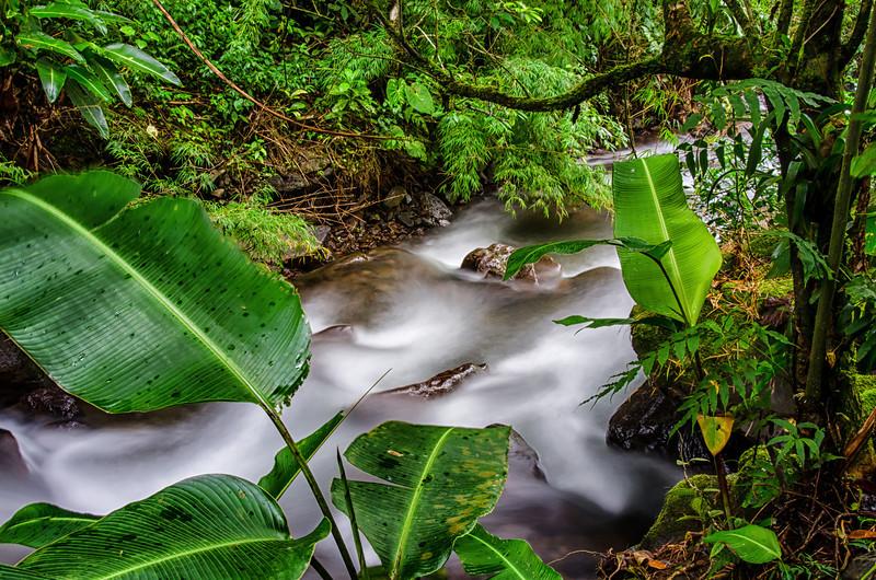 WAb248 Cloud Forest Stream, Bosque de Paz, Costa Rica
