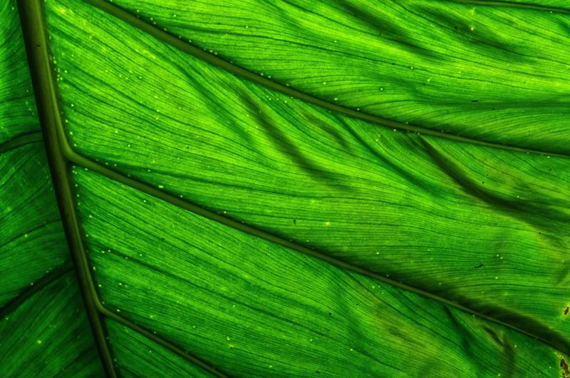 NBb73 Palm Leaf Detail, Selva Verde, Costa Rica