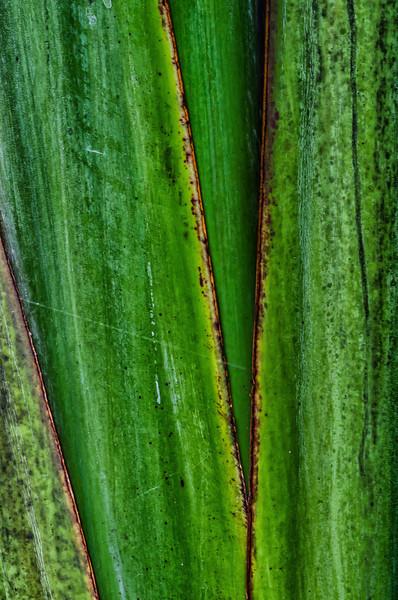 NBb44 Palm Abstract, San Jose, Costa Rica