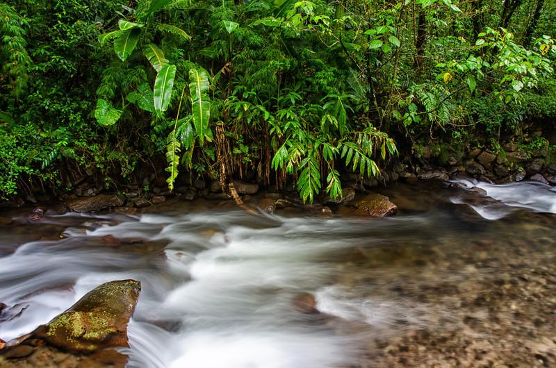 WAb234 Cloud Forest Stream, Bosque de Paz, Costa Rica