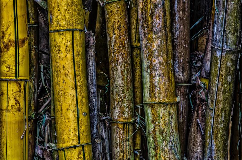 NBb28 Bamboo sp , San Jose, Costa Rica