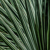 NBb37 Palm Fronds Abstract, San Jose, Costa Rica