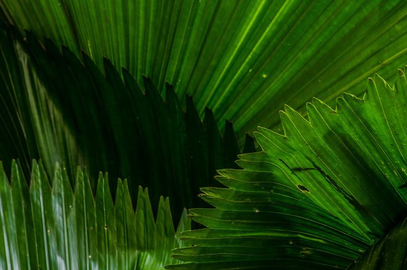 NBb97 Palm Frond Detail, Selva Verde, Costa Rica