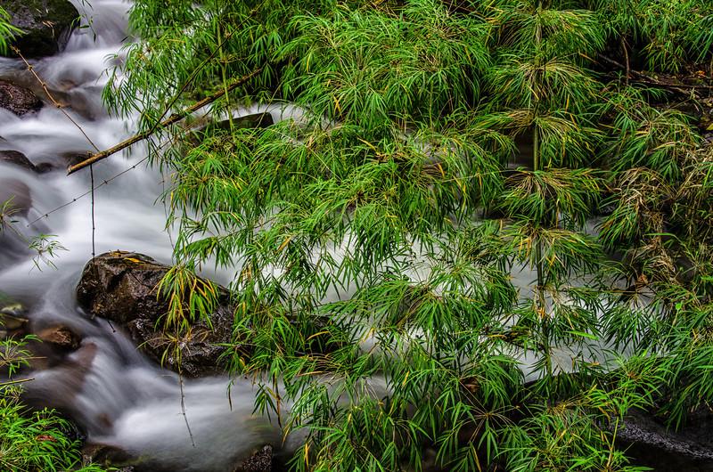 WAb241 Cloud Forest Stream, Bosque de Paz, Costa Rica