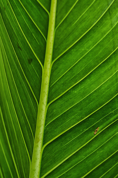 NBb52 Palm Frond Detail, San Jose, Costa Rica