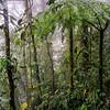 WAb392 Rain Forest, Sarchi, Costa Rica