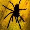 Tarantula (2)