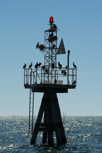 Cormorants on Harbor Light, Harwich, Cape Cod, MA