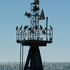 Cormorants on Harbor Light, Harwich, Cape Cod, MA