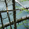 WAa895 - Avalanche Creek, Glacier NP, Montana