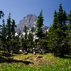 WAa572 - Alpine Meadow and Bearhat Mtn, Glacier NP, Montana