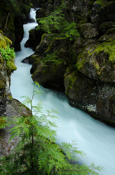 WAa867 - Avalanche Creek, Glacier NP, Montana