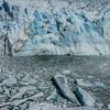 WAb1279 Los Glaciares NP, Perito Moreno Glacier, Santa Cruz, Argentina