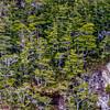 WAb1493 subAntarctic Forest, Alberto De Agostini NP, Ainsworth Bay, Patagonia, Chile