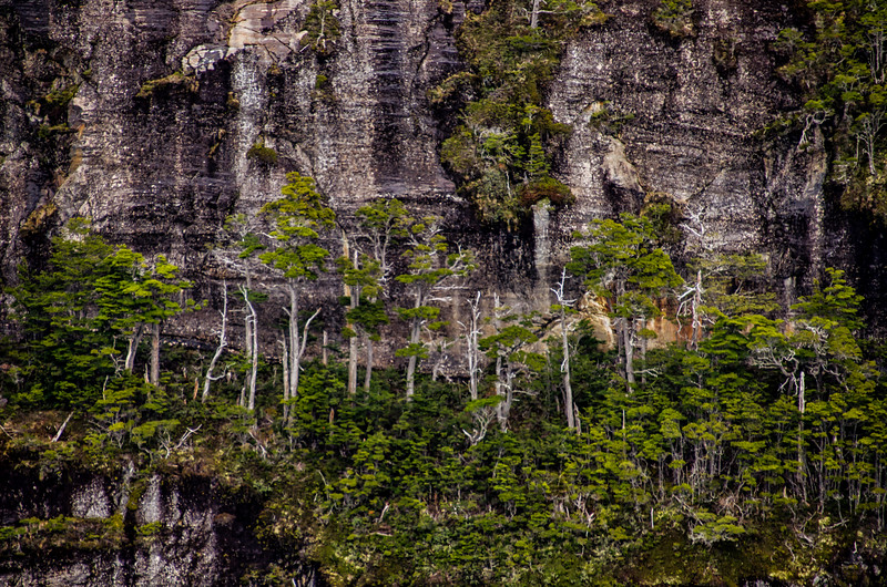 WAb1507 subAntarctic Forest, Alberto De Agostini NP, Ainsworth Bay, Patagonia, Chile