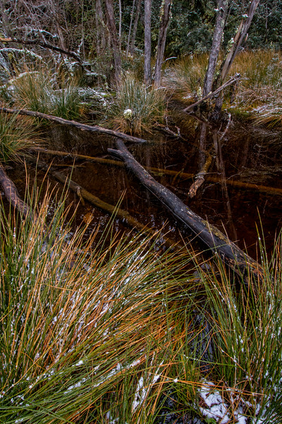 WAb878 Pond in  sub-Antarctic Southern Beech (Nothofagus) Forest, Almirantazgo Bay, Chile