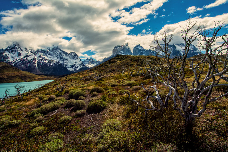 WAb2197 pre-Andean Matorral, Lake Grey & Paine Massif, Torres del Paine NP, Chile