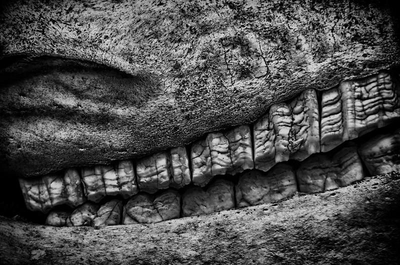 WBb1957 Horse Skull, Bus Stop, Casa Viejas, Chile