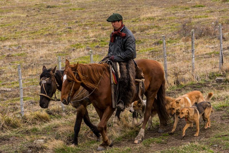 PB335 Gaucho & Dogs, Patagonian Steppe, Cerro Castillo, Chile