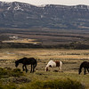 NAa973 Horses, La Anita Valley, El Calafate, Argentina