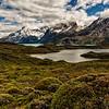 NBa1635 Fire Bush (Anarthrophyllum desideratum), Lake Nordernskjold & Paine Massif, Torres del Paine NP, Chile