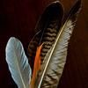 WBb2000 Feathers, Eolo Lodge, La Anita Valley, El Calafate, Argentina