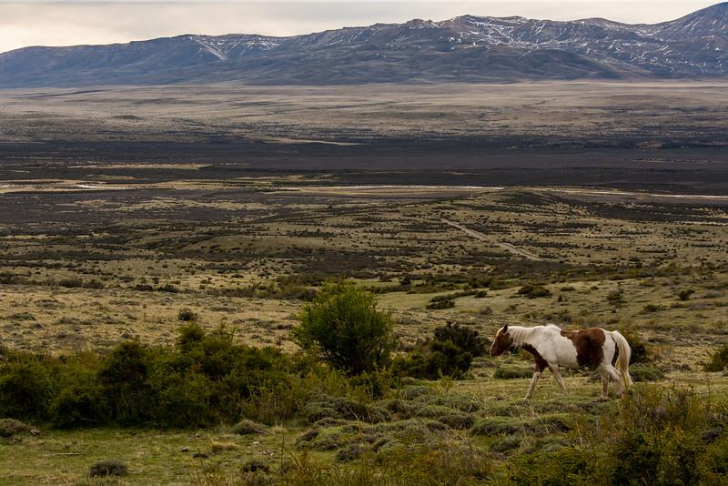 NAa984 Horse, La Anita Valley, El Calafate, Argentina