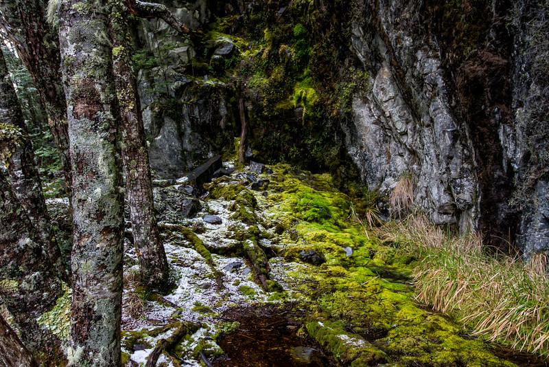 WAb856 Moss, sub-Antarctic Southern Beech (Nothofagus) Forest, Alberto De Agostini NP, Almirantazgo Bay, Chile