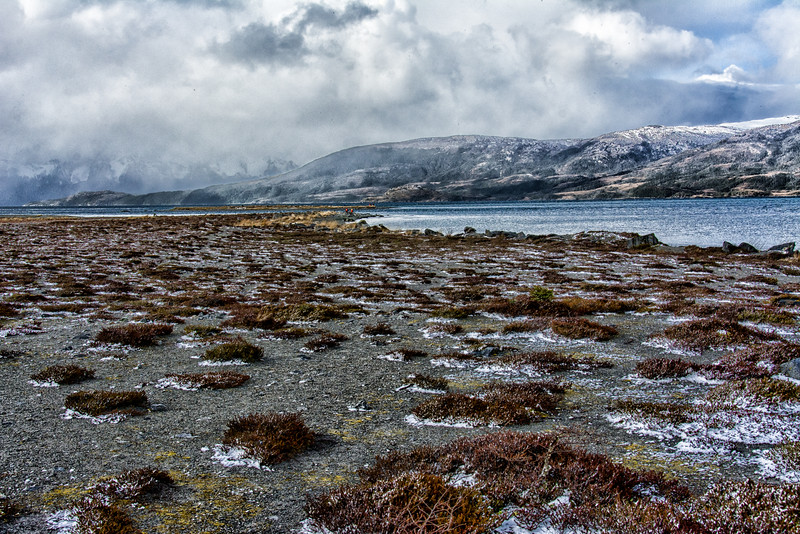 WAb802 sub-Antarctic Southern Beech (Nothofagus) Forest, Alberto De Agostini NP, Almirantazgo Bay, Patagonia, Chile