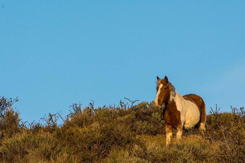 NAa1258 Horse, La Anita Valley, El Calafate, Argentina