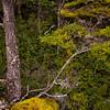 WAb1907 Beech (Nothofagus) Forest, Torres del Paine NP, Puerto Natales, Chile