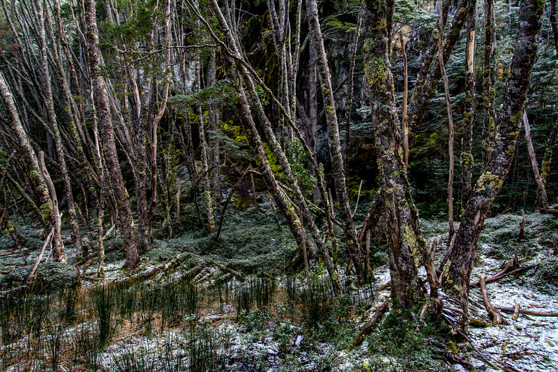 WAb845 sub-Antarctic Southern Beech (Nothofagus) Forest, Alberto De Agostini NP, Almirantazgo Bay, Patagonia, Chile