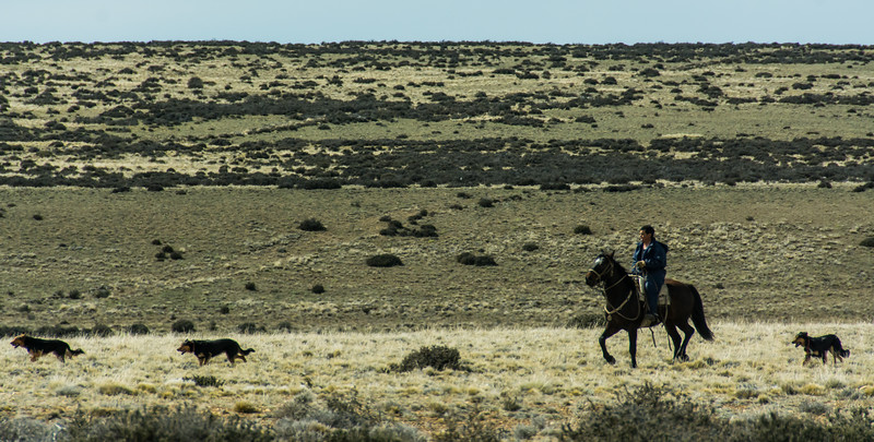 PB296 Gaucho & Dogs, Patagonian Steppe, Patagonia, Chile
