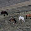 NAa1229 Horses, La Anita Valley, El Calafate, Argentina