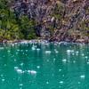 WAb1480 subAntarctic Forest, Alberto De Agostini NP, Ainsworth Bay, Patagonia, Chile