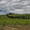 WBb592 - Vineyards, Chianti, Italy